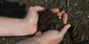 Camperdown Compost